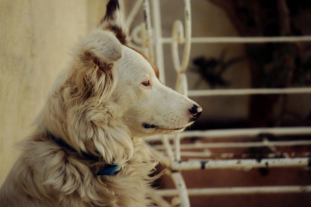 animales-domesticos-perro-perfil_121-62314