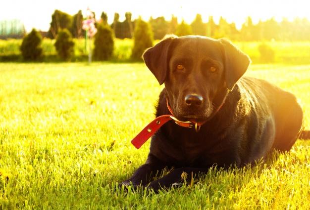perro-tumbado-en-la-hierba_1204-138